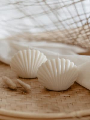 Shell Candle Nature